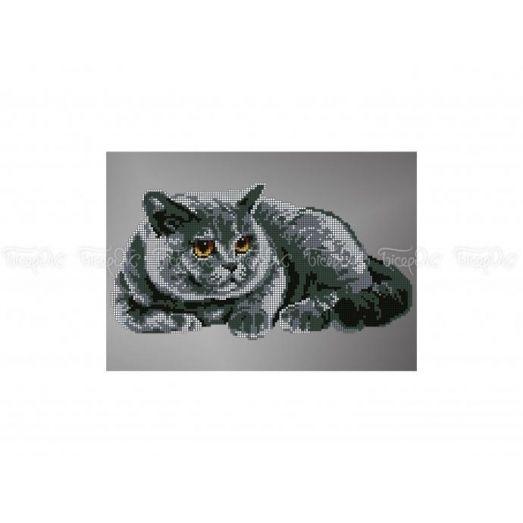 50-308 (30*40) Кот. Схема для вышивки бисером Бисерок