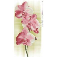 ТК-005 Нежные орхидеи. Схема для вышивки бисером. Барвиста Вишиванка